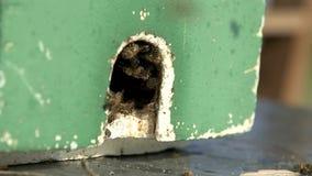 El enjambre de la abeja acaba de trasladarse a un colmenar del poliestireno almacen de metraje de vídeo