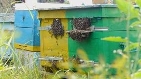El enjambre de la abeja cerca de la entrada a la colmena apiary almacen de video