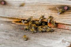 El enjambre de la abeja se está sentando en la calle Imagen de archivo libre de regalías