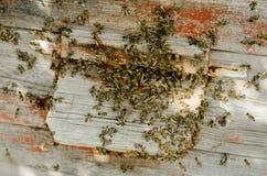 El enjambre de la abeja se está sentando en la calle Imagen de archivo