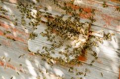 El enjambre de la abeja se está sentando en la calle Fotografía de archivo