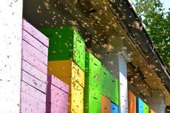 El enjambre de las abejas, moscas a los grupos pintó recientemente la colmena fotos de archivo libres de regalías