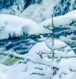 El enlace cae en invierno Imagen de archivo libre de regalías