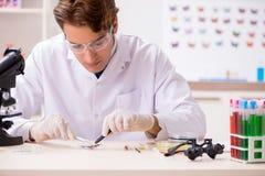 El entomólogo del científico que estudia nueva especie de la mariposa foto de archivo