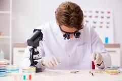 El entomólogo del científico que estudia nueva especie de la mariposa fotografía de archivo libre de regalías