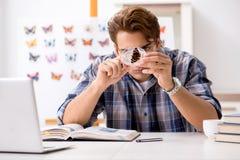 El entomólogo del estudiante que estudia la nueva especie de mariposas fotografía de archivo libre de regalías