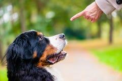 El entrenamiento de la mujer con el perro sienta comando Fotos de archivo libres de regalías