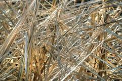 El entretejer de tallos secos de la hierba del pantano foto de archivo