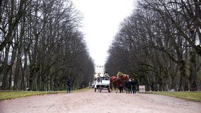 El equipo con el carro lleva a turistas en el parque almacen de video