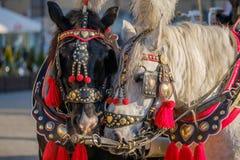 El equipo de dos adornó los caballos para los turistas que montaban Imágenes de archivo libres de regalías