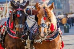 El equipo de dos adornó los caballos para los turistas que montaban Imagen de archivo