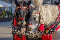 El equipo de dos adornó los caballos para los turistas que montaban Foto de archivo