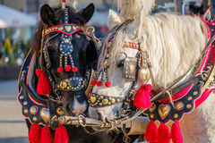 El equipo de dos adornó los caballos para los turistas que montaban Fotos de archivo