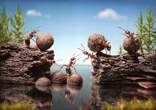 El equipo de hormigas trabaja construyendo la presa, trabajo en equipo Fotografía de archivo libre de regalías