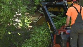 El equipo del retiro salta los miembros de árbol almacen de video