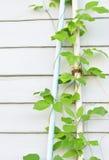 El escalador en una pared de madera blanca Fotos de archivo