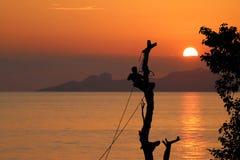 El escalador local del árbol está cortando una rama vio a mano, los soles rojos del cielo Foto de archivo libre de regalías