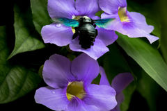 El escarabajo pasaba su tiempo feliz Fotografía de archivo libre de regalías