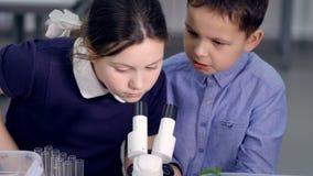 El escolar primario que pide que la muchacha mire en el microscopio durante el experimento de la ciencia Primer 4K metrajes