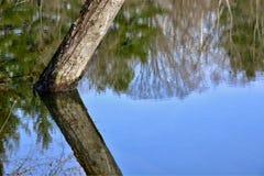 El espejo como el agua refleja árboles en un parque Fotografía de archivo libre de regalías