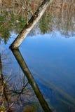 El espejo como el agua refleja árboles en un parque Foto de archivo