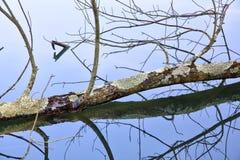 El espejo como el agua refleja árboles en un parque Imagen de archivo