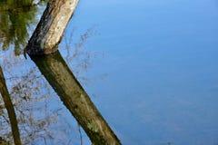 El espejo como el agua refleja árboles en un parque Fotografía de archivo