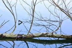 El espejo como el agua refleja árboles en un parque Fotos de archivo