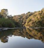 El espejo en el bosque Imagenes de archivo
