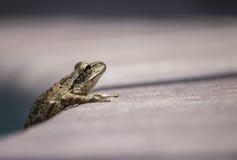El esperar de la rana Imagen de archivo libre de regalías