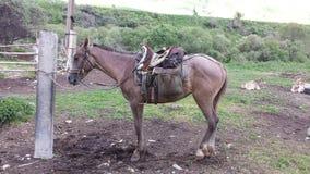 El esperar del caballo Imágenes de archivo libres de regalías