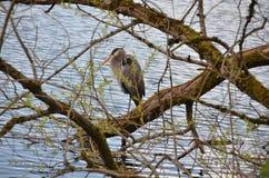 El esperar del pájaro Fotografía de archivo libre de regalías