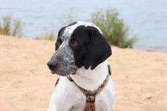 El esperar del perro imagen de archivo libre de regalías