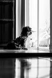 El esperar del perro Foto de archivo