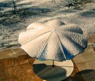 El esperar en las sombras del invierno Fotografía de archivo libre de regalías