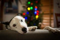 El esperar en Santa Imagen de archivo libre de regalías