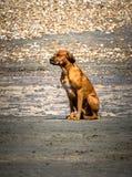 El esperar solitario del perro Imagen de archivo