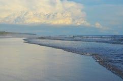 EL Espino de Playa Imagem de Stock Royalty Free