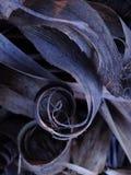 El espiral de la naturaleza Imagen de archivo libre de regalías