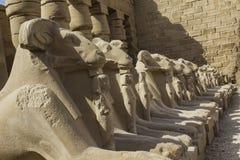Esfinges en el templo de Karnak. Luxor. Fotos de archivo