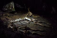 El esqueleto de un animal prehistórico en la cueva del karst Fotografía de archivo libre de regalías