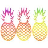 El esquema de la fruta tropical de la piña del vector fijó con pendientes Foto de archivo