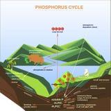 El esquema del ciclo del fósforo, planos diseña Fotografía de archivo