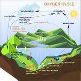 El esquema del ciclo del oxígeno, planos diseña Imágenes de archivo libres de regalías