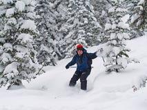 El esquiador abajo lanza el bosque y la nieve imagen de archivo libre de regalías
