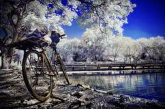 El estacionamiento de la bicicleta bajo blanco deja árboles Foto de archivo libre de regalías