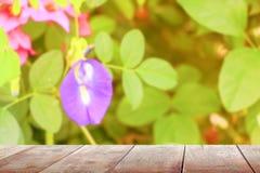 El estante de madera vacío del piso del tablero de la textura de la tabla con la flor borrosa del guisante de mariposa en fondo d imagen de archivo