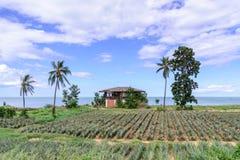 El estilo tailandés abandonó la playa de la casa con el campo de la piña Fotografía de archivo