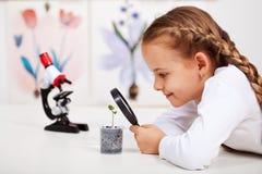 El estudiante joven estudia la pequeña planta Imágenes de archivo libres de regalías