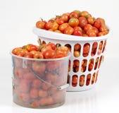 El estudio tiró de dos cestas de tomates del campo Imagen de archivo libre de regalías